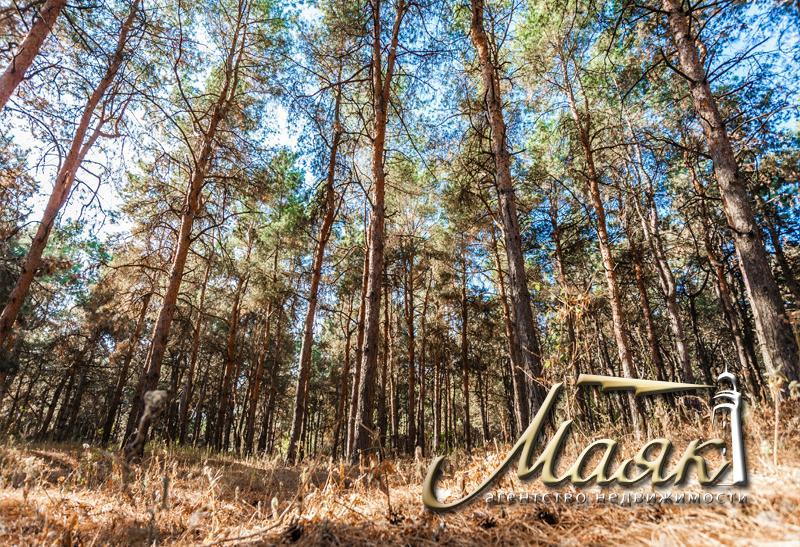 Предлагается к продаже участок, окруженный сосновым лесом.