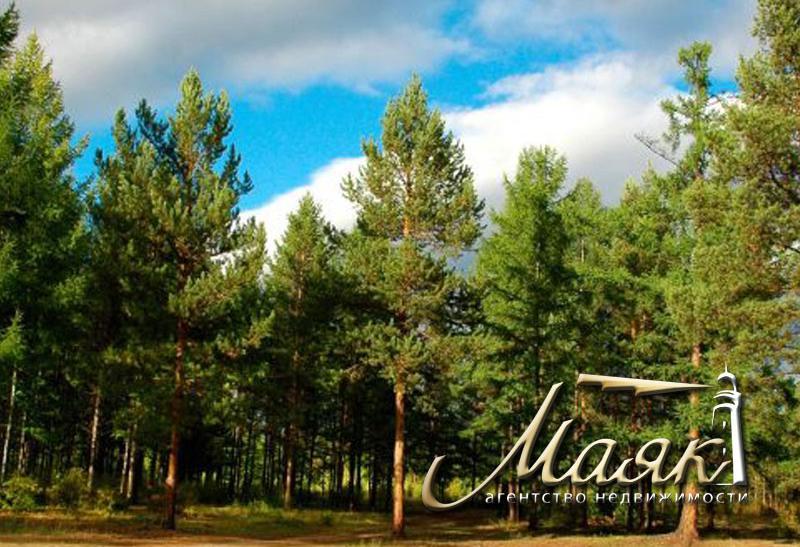 Участок в лесу в с. Разумовка.